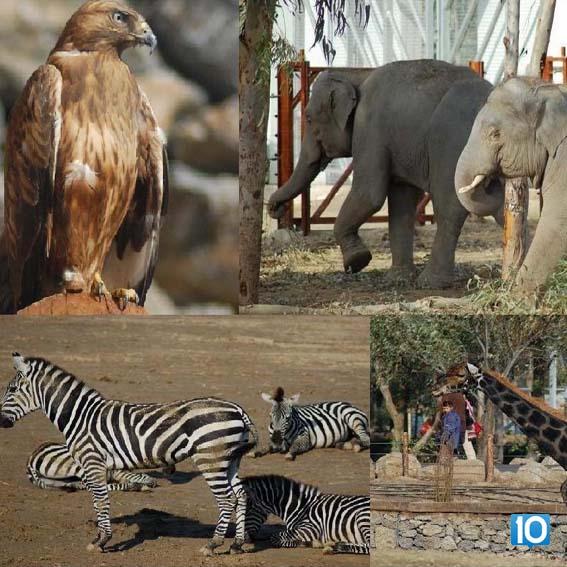 hayvanlarii-korumak-hepsi10numara