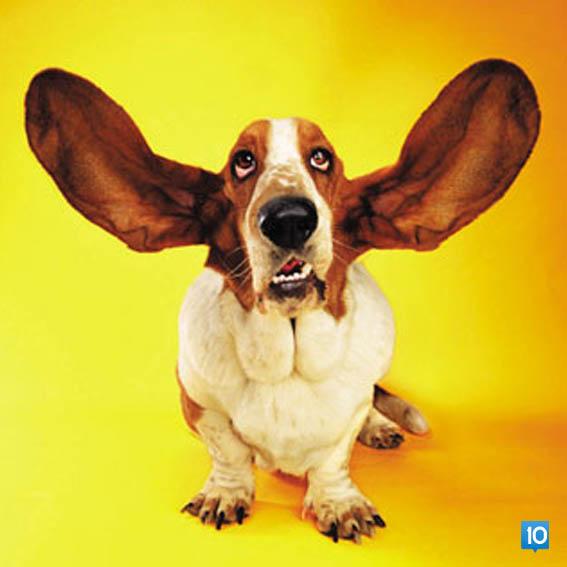 kulaklarini-ac-dort-dinle