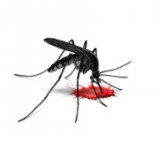 sivrisinek_sokmasi