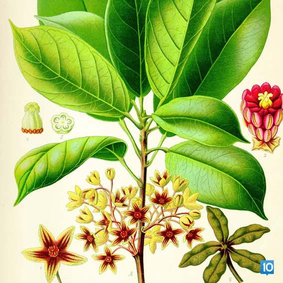 aromatrapi